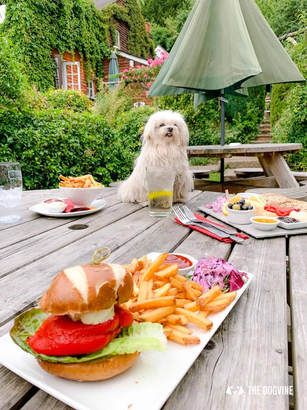Dog-friendly King WIlliam IV Pub Mickleham 5
