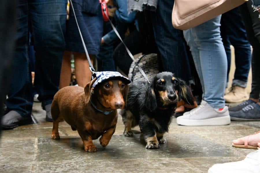 Dog-walk the Wall | National Dog Day