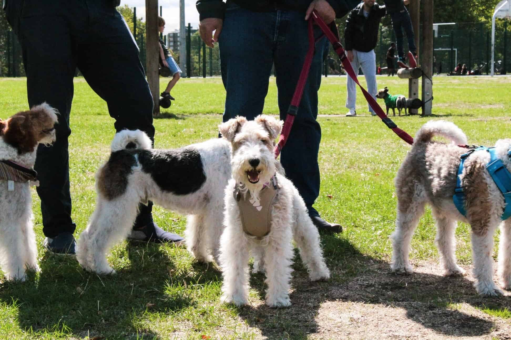 Hackney Downs Dog Day 2019