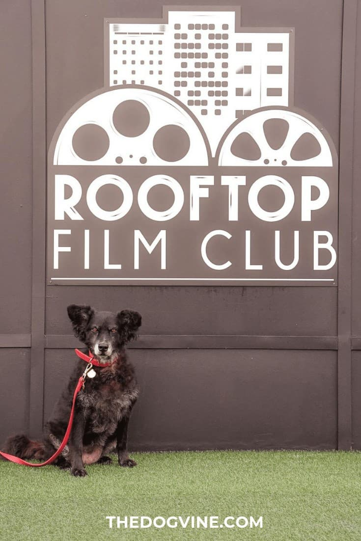 London Dog Events and Things to Do August 2019 Rooftop Film Club Peckham