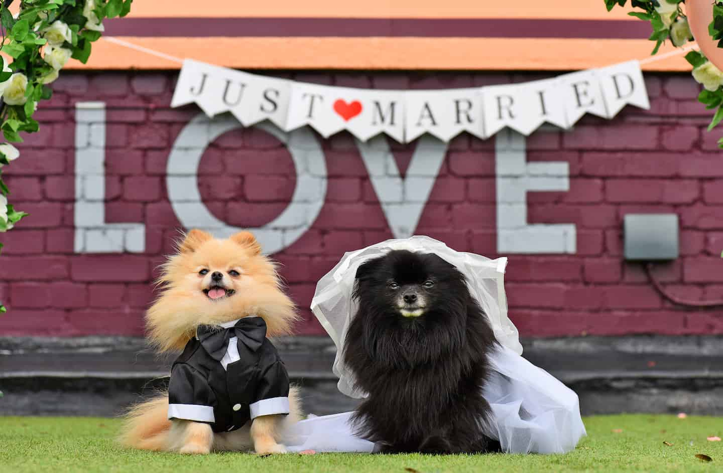 London Dog Wedding At The Rooftop Film Club Wooftop Wedding Service 1