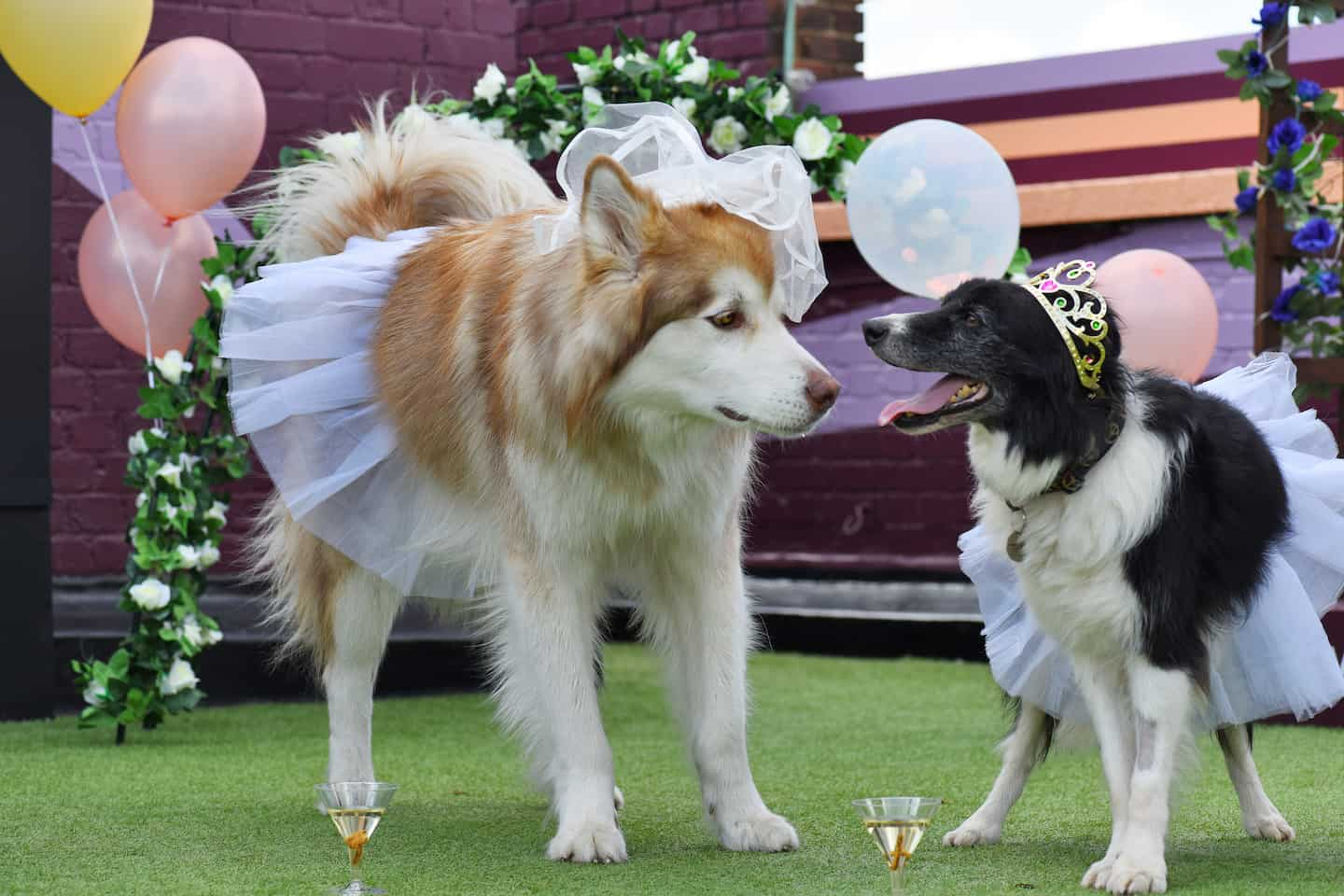 London Dog Wedding At The Rooftop Film Club Wooftop Wedding Service 2