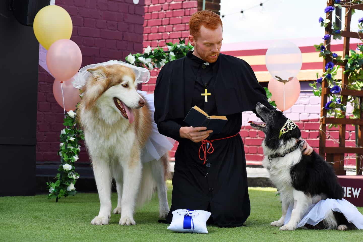London Dog Wedding At The Rooftop Film Club Wooftop Wedding Service 3