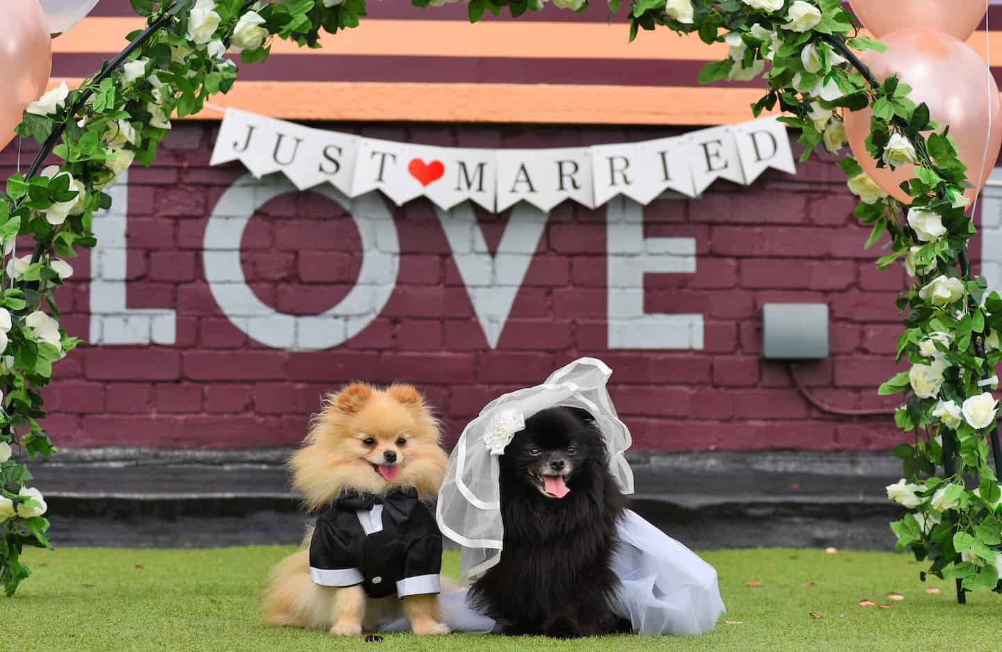 London Dog Wedding At The Rooftop Film Club Wooftop Wedding Service 4