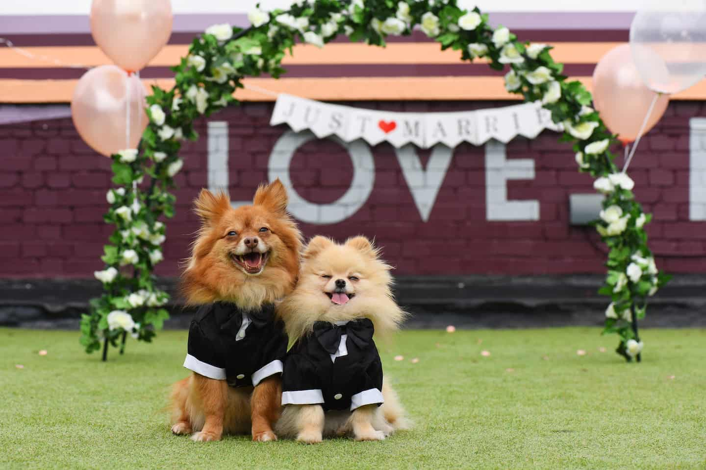 London Dog Wedding At The Rooftop Film Club Wooftop Wedding Service 5