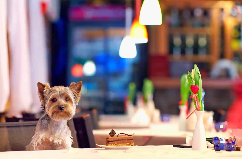 Best Dog-friendly Afternoon Tea in London - Dog Menus