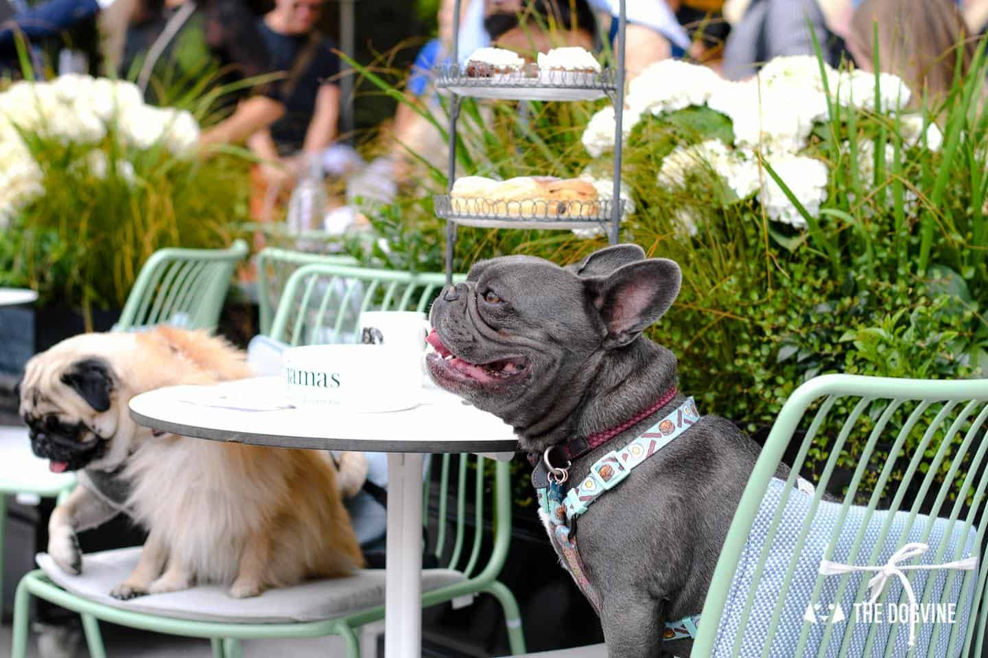 Best Dog-friendly Afternoon Tea in London - Pop-up Events 2