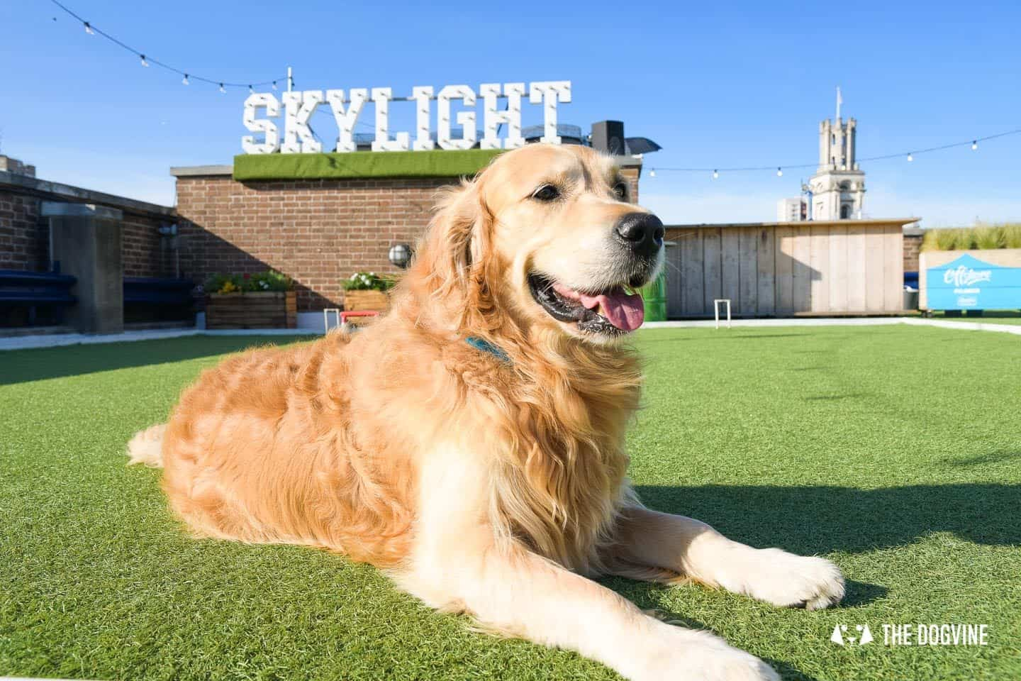 Every Day is a Dog Day At Dog-friendly Skylight London -17