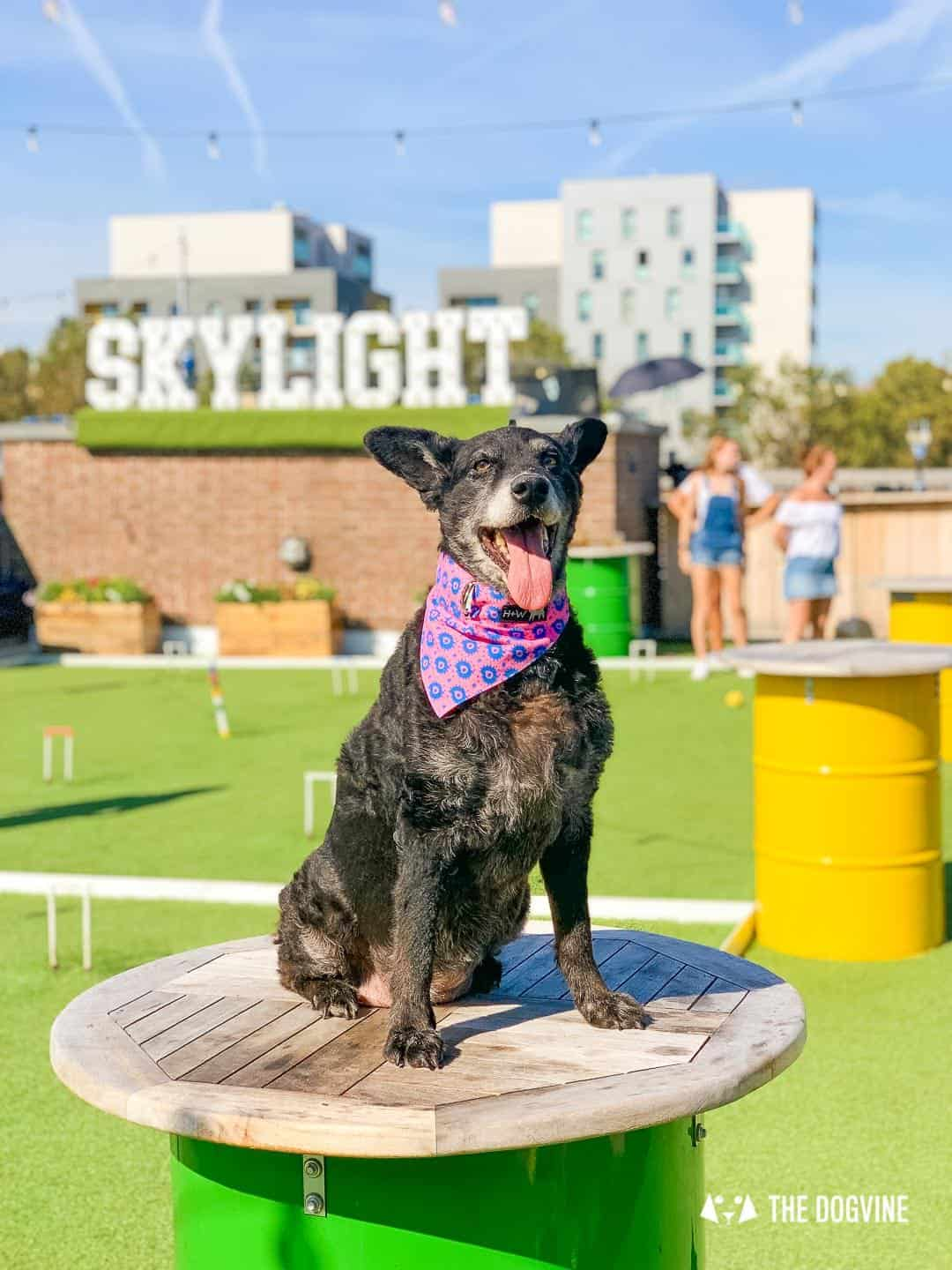 Every Day is a Dog Day At Dog-friendly Skylight London -19
