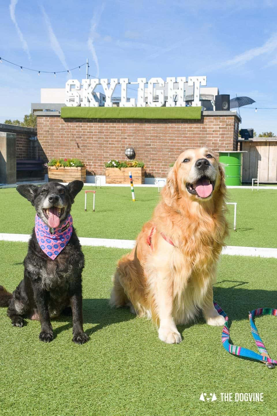 Every Day is a Dog Day At Dog-friendly Skylight London -2