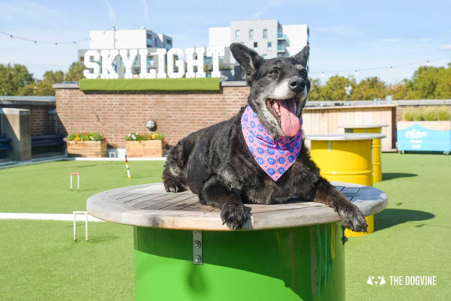 Every Day is a Dog Day At Dog-friendly Skylight London -25