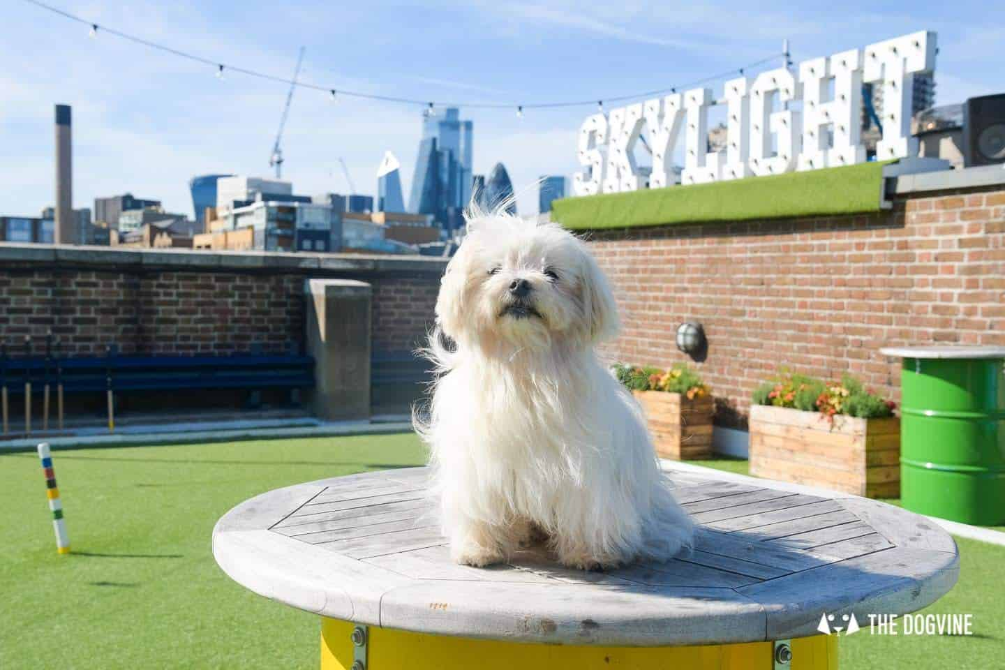 Every Day is a Dog Day At Dog-friendly Skylight London -5