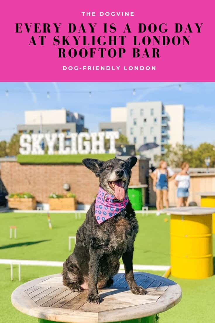 Every Day is a Dog Day At Dog-friendly Skylight London Rooftop Bar
