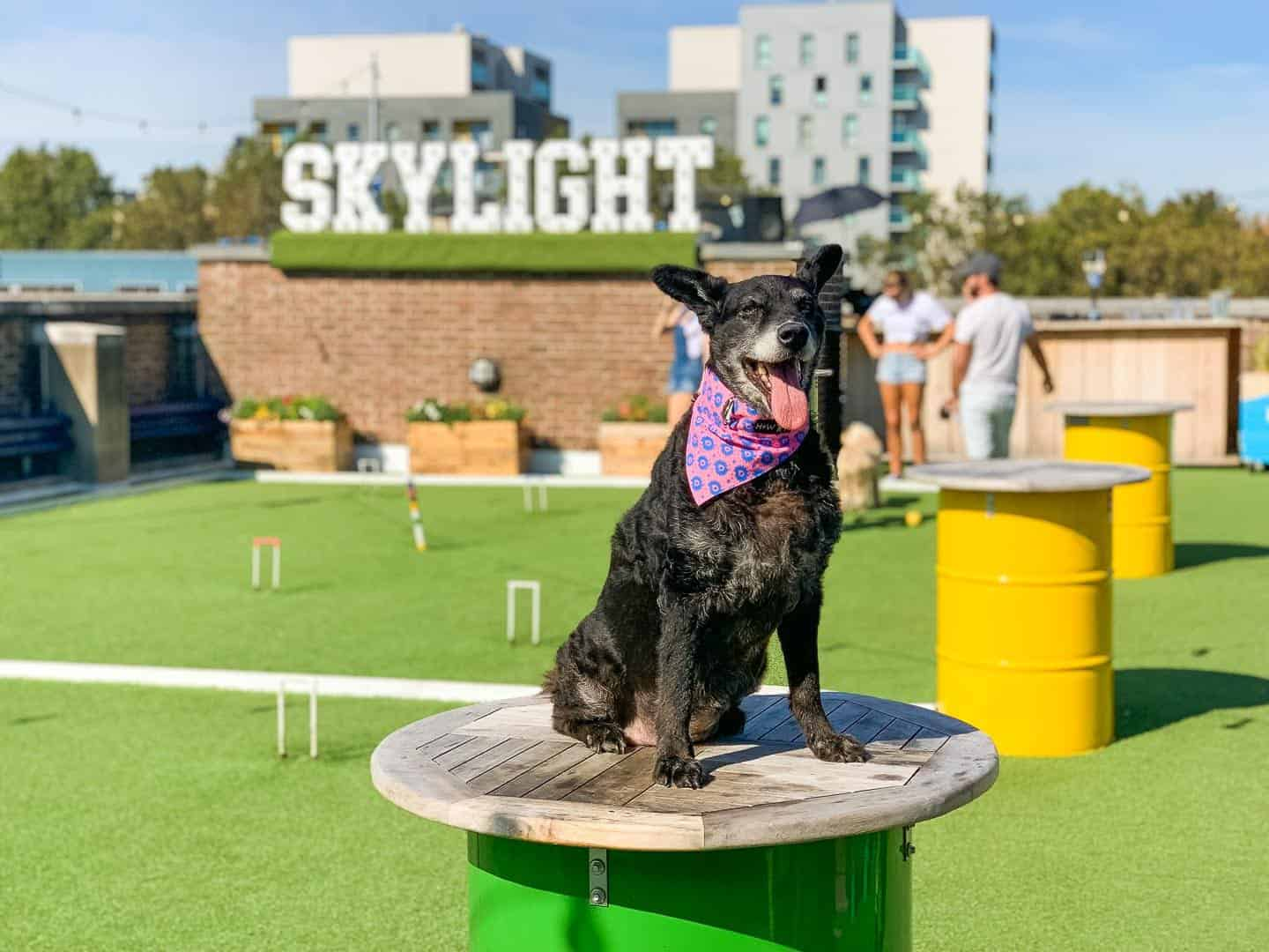 Every Day is a Dog Day At Dog-friendly Skylight London