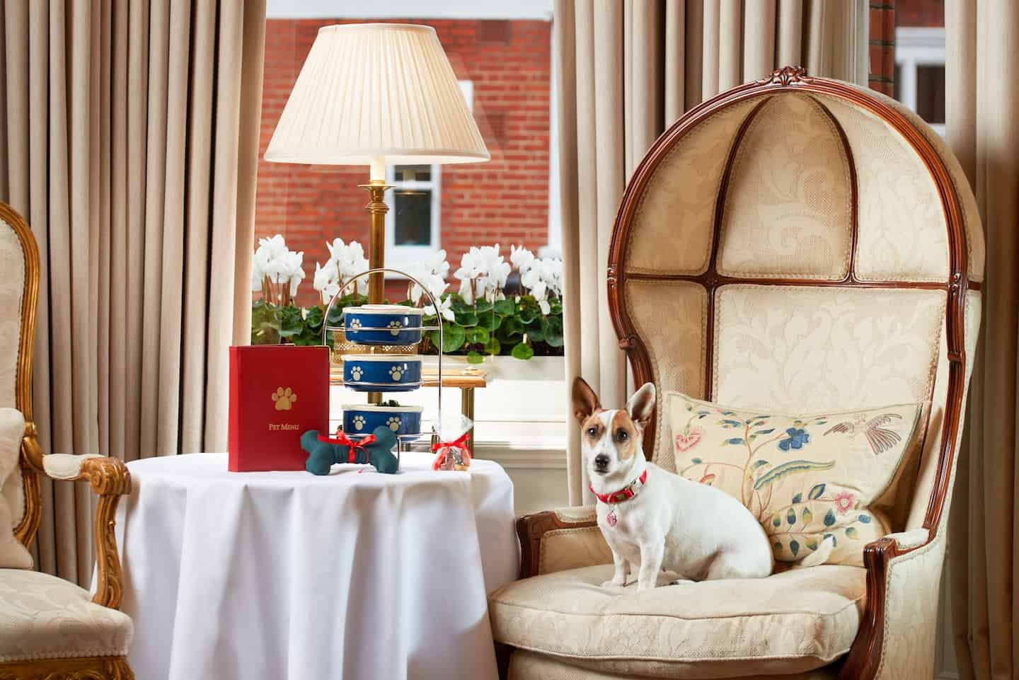 Guide To The Best Dog-friendly Afternoon Tea in London