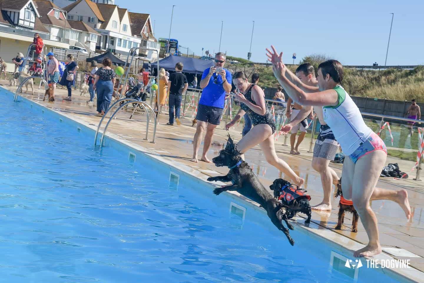 Jumping Into The Pool At The Saltdean Lido Dog Swim
