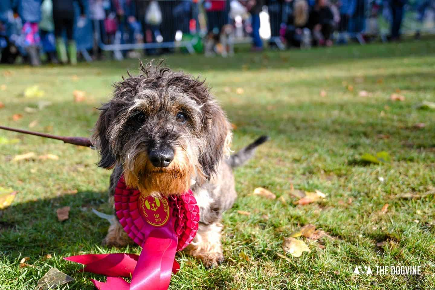 London Dog Events and Things to Do September 2019 - Dog Shows