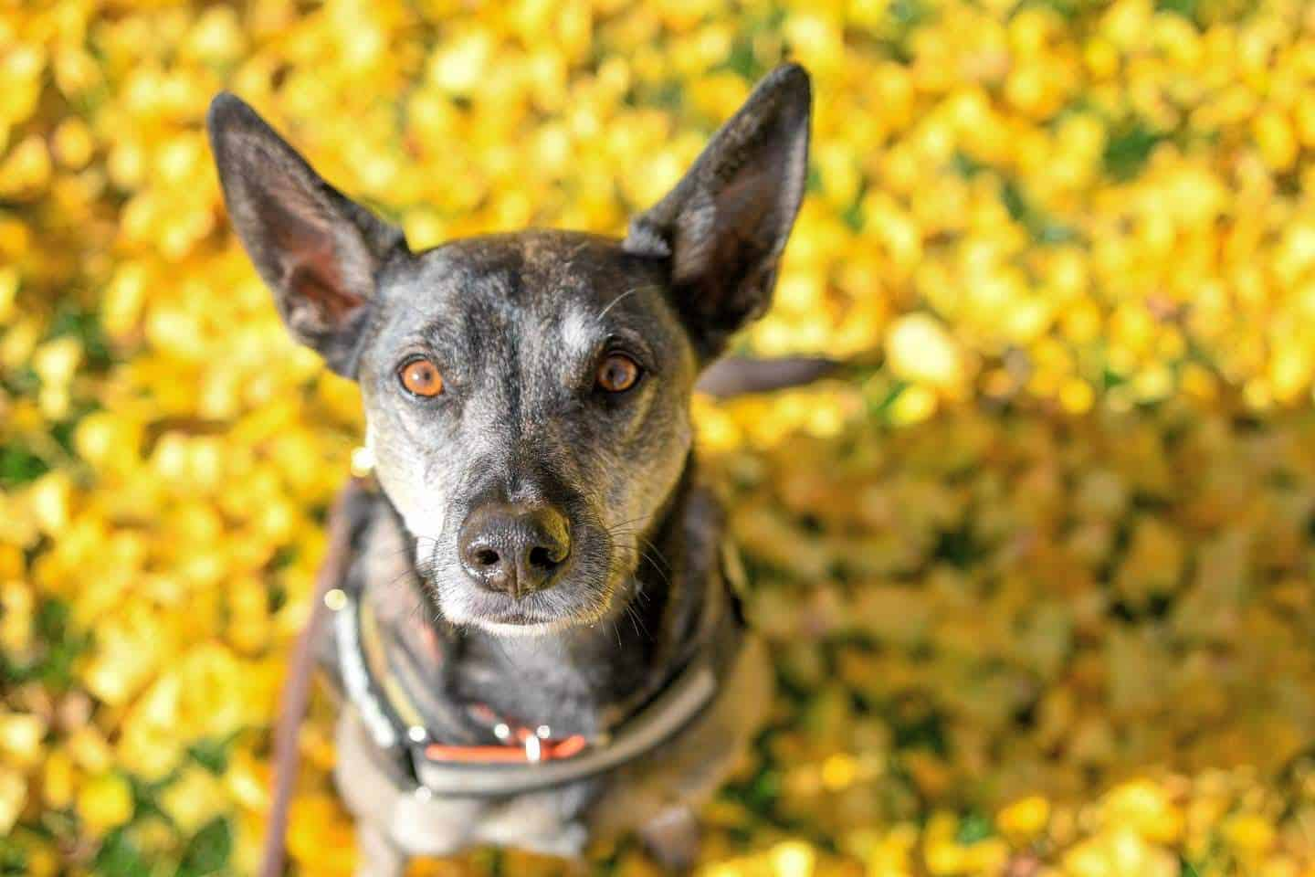 London Dog Events and Things to Do September 2019 What's On