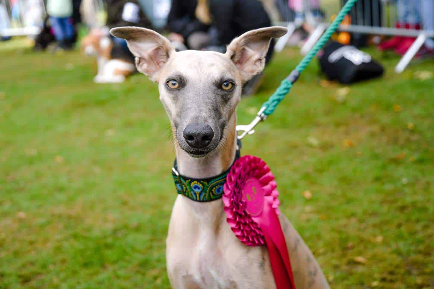 London Dog Events and Things to Do September 2019