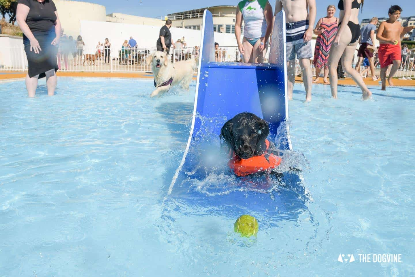 Pups In The Pool At Saltdean Lido Dog Swim
