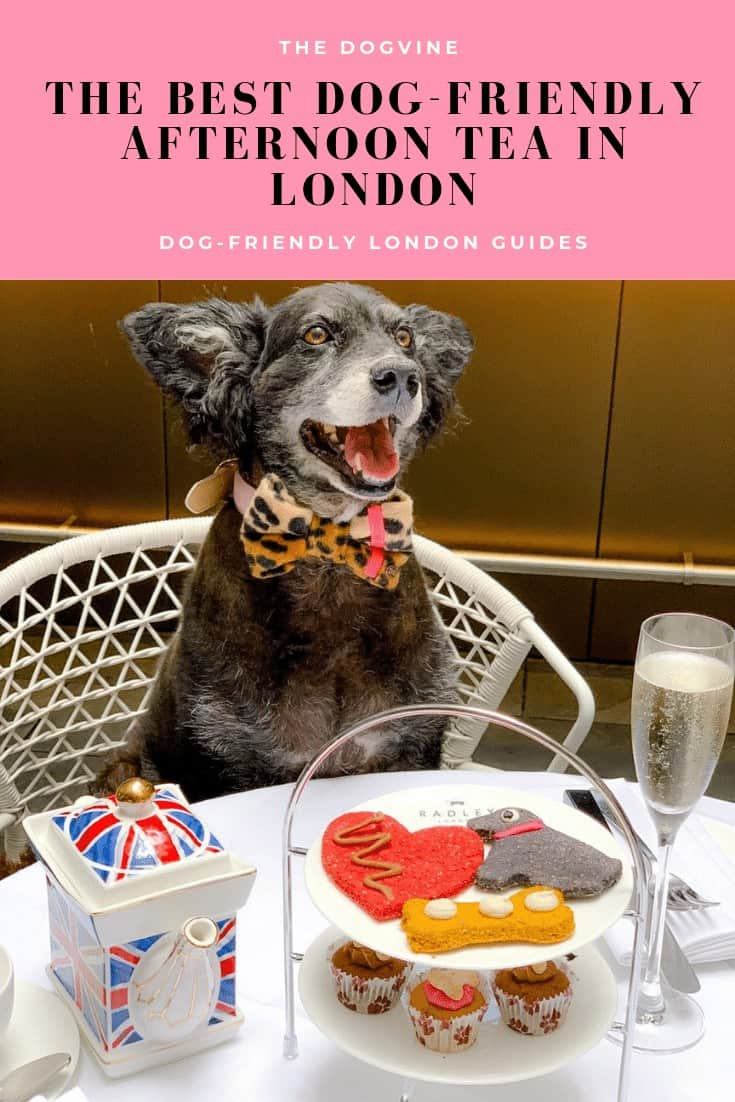 The Dogvine Dog-friendly London Guides _ Best Dog-friendly Afternoon Tea in London (1)