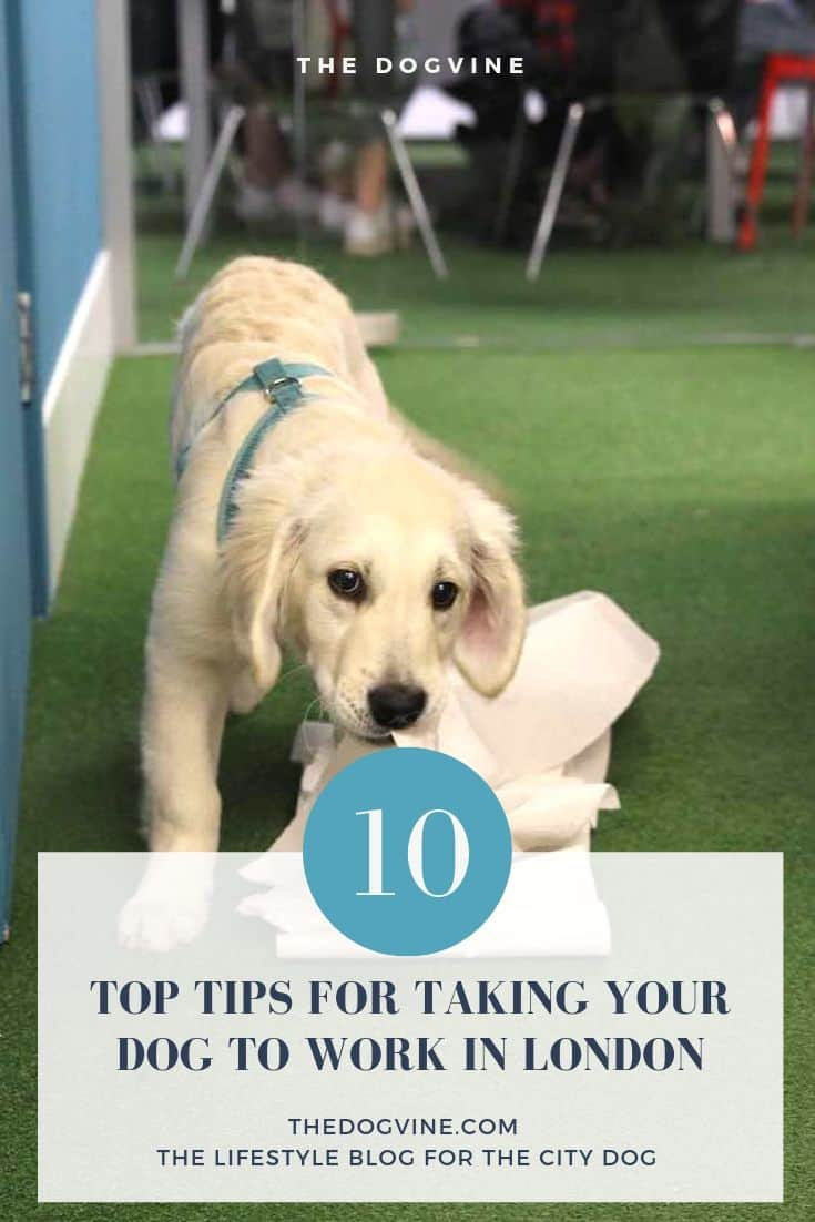 10 Top Tips for taking your dog to work in London from TopLine Film