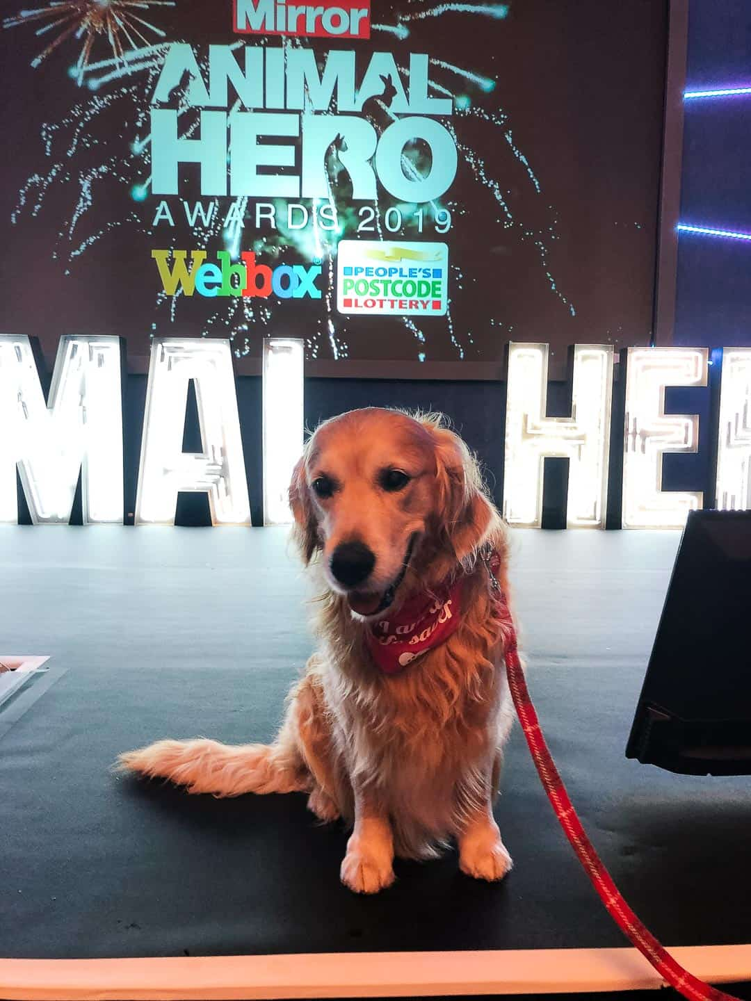 Animal Hero Awards 2019- Who's Saving Who