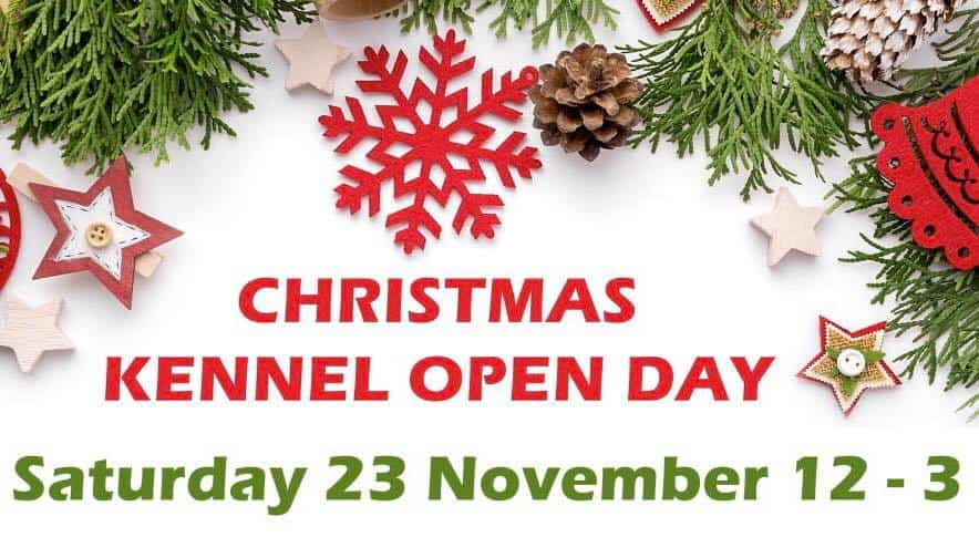 Celia Cross Greyhound Trust Christmas 2019 Open Day At The Kennels