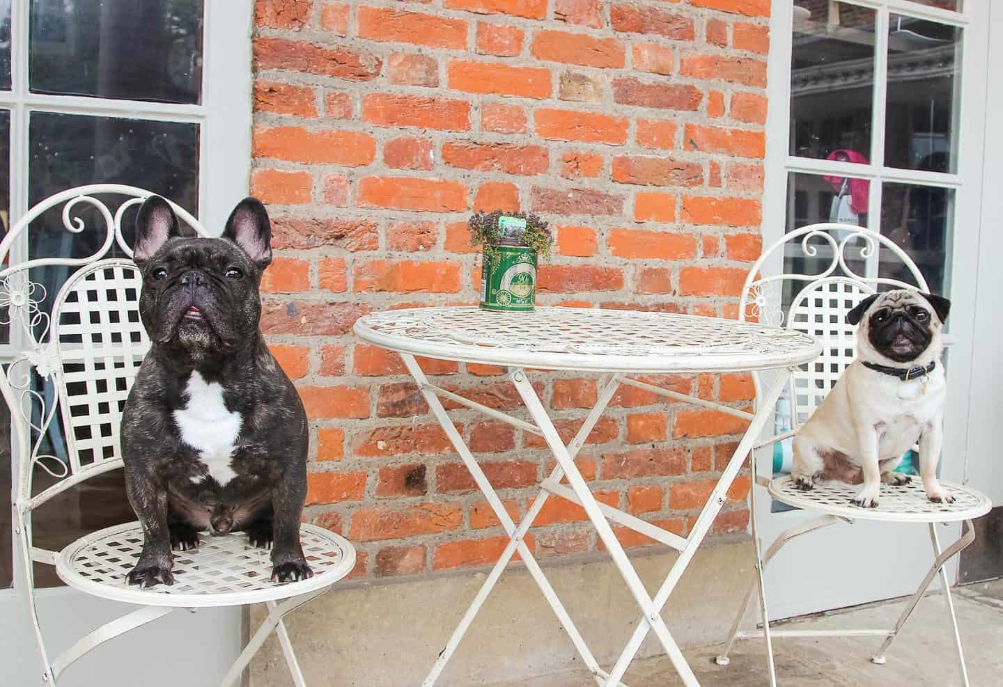 Dog-friendly Enfield - Nice Green Cafe 2