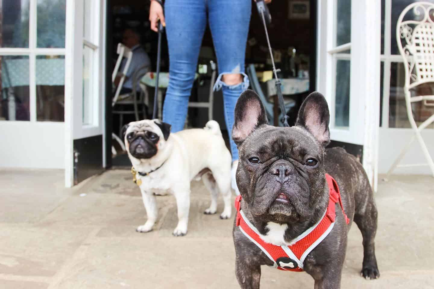 Dog-friendly Enfield - Nice Green Cafe 3