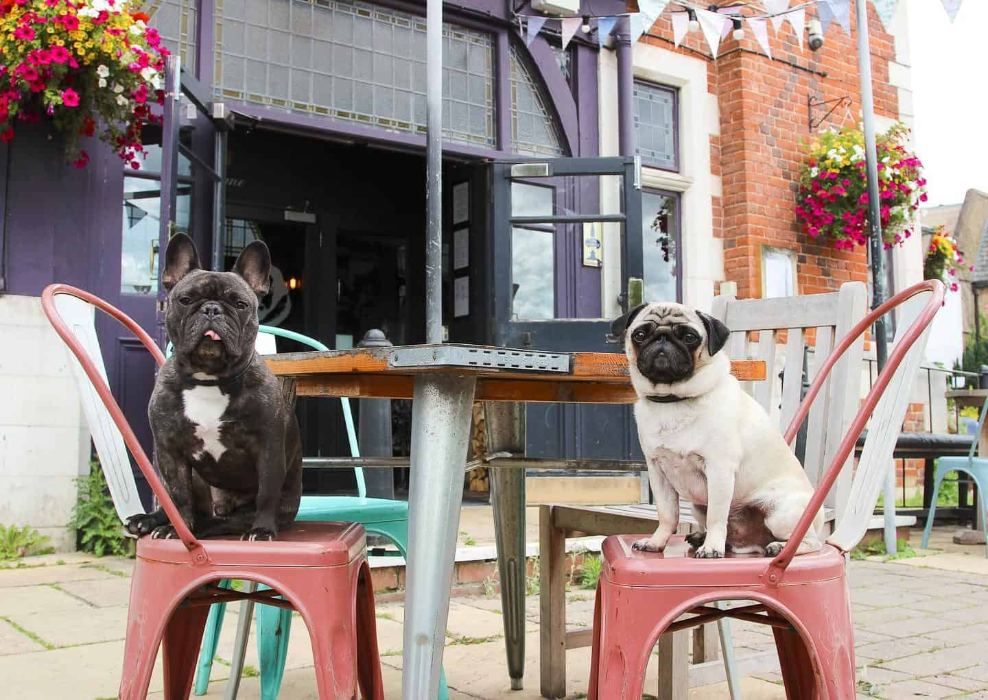 Dog-friendly Enfield - The Salisbury Arms 1