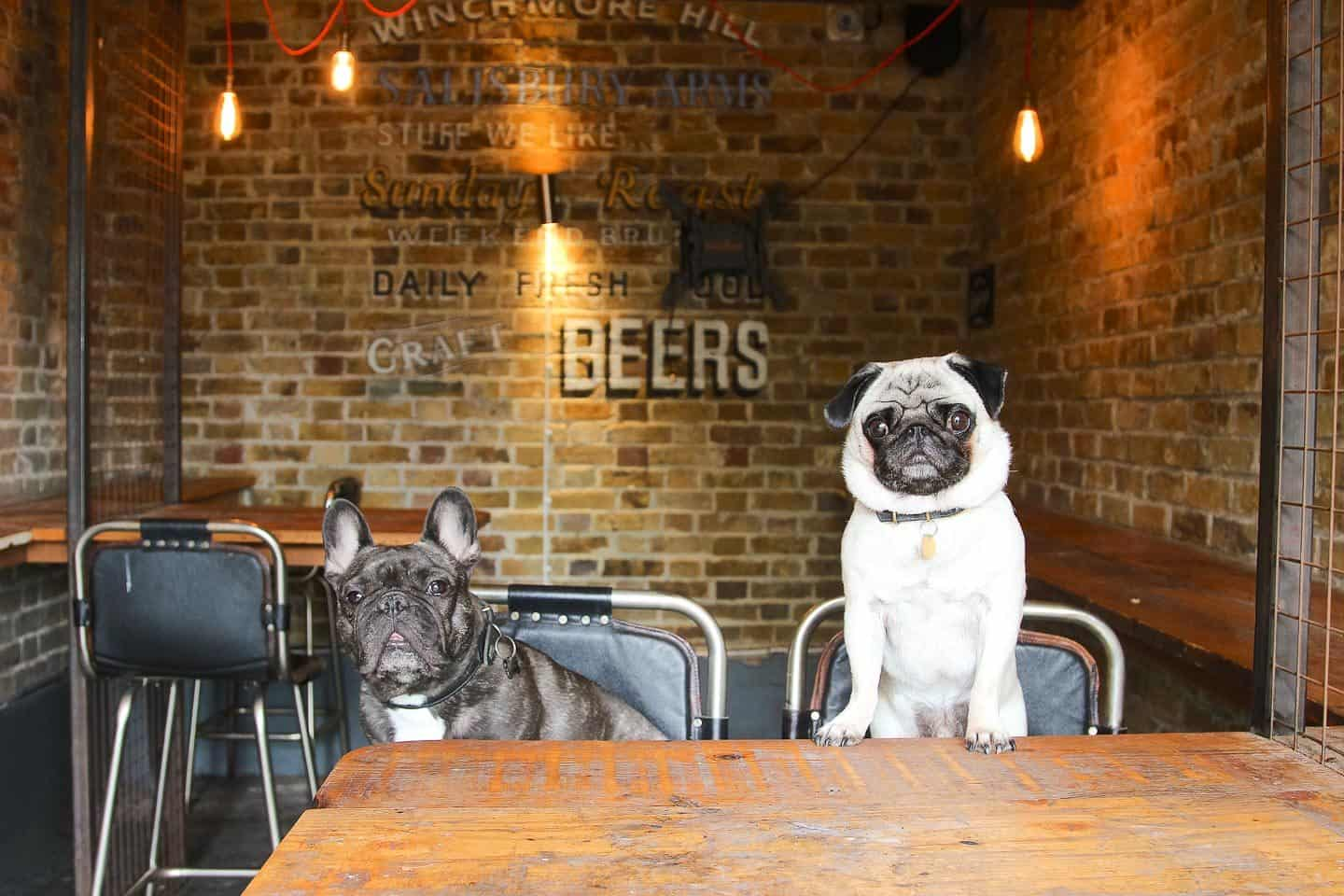 Dog-friendly Enfield - The Salisbury Arms 2