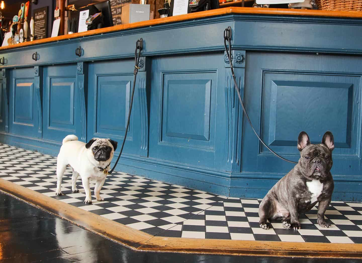 Dog-friendly Enfield - The Salisbury Arms 3