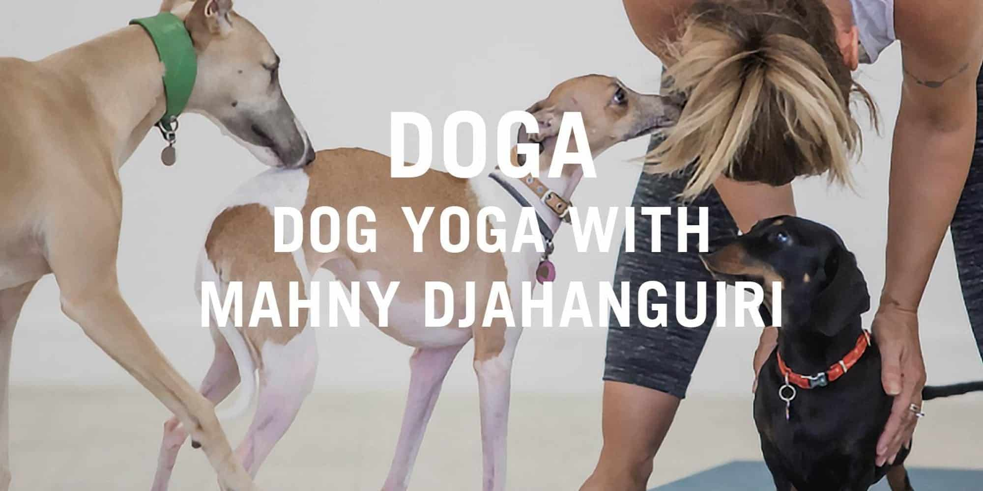Doga At The Stratford