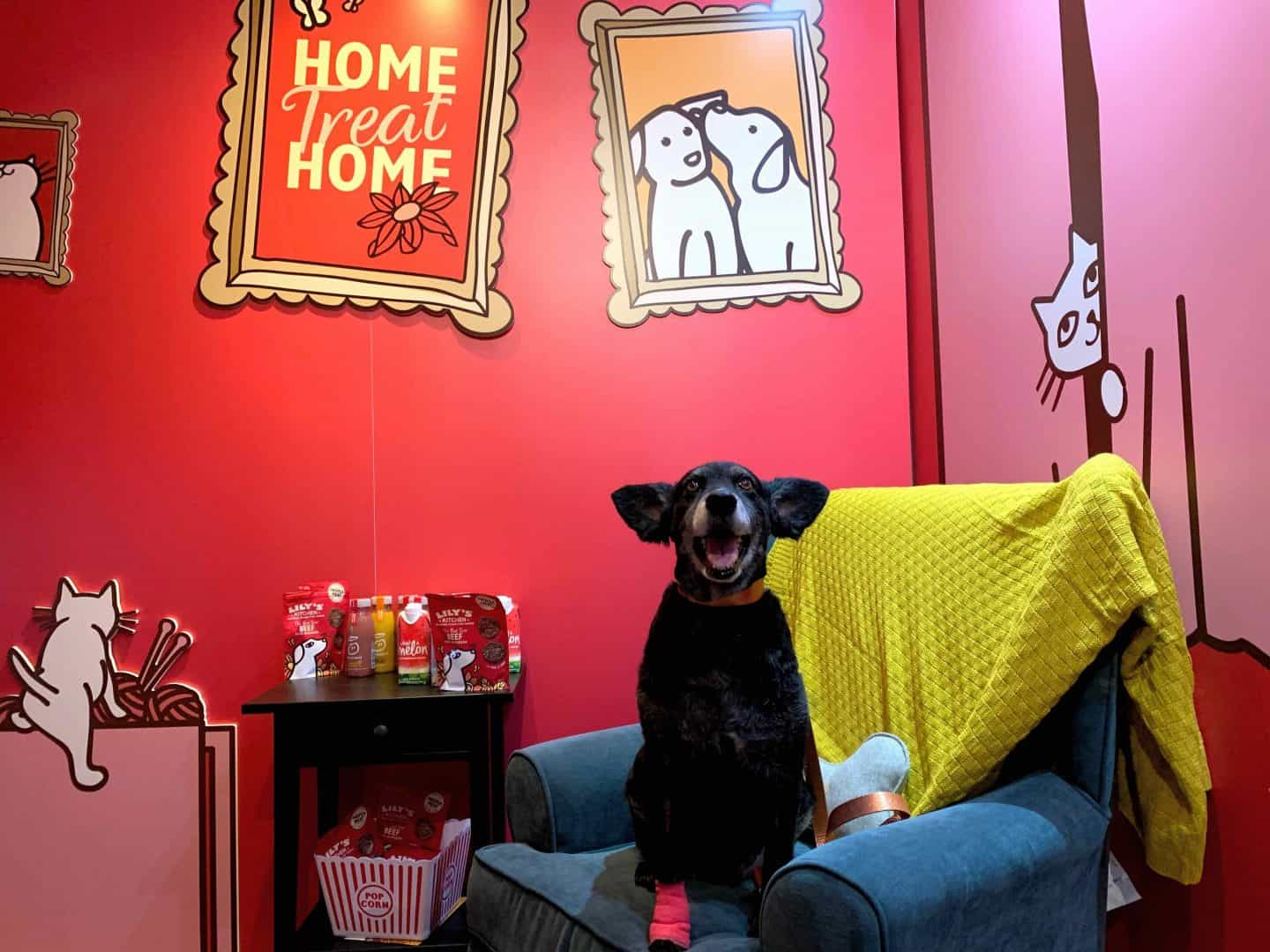 Lilys Kitchen Proper Treats Launch Dogs Dream House Of Treats 21