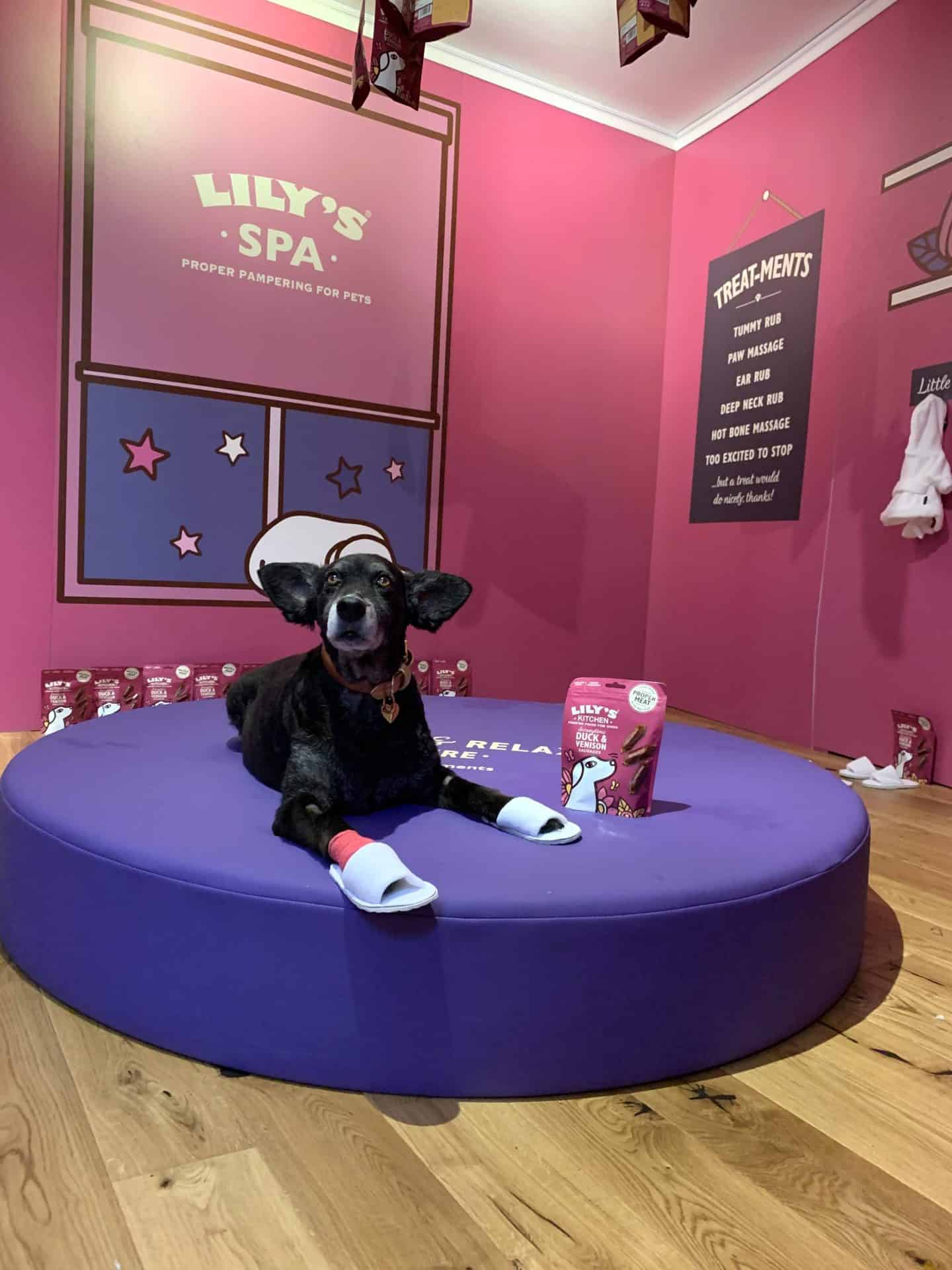 Lilys Kitchen Proper Treats Launch Dogs Dream House Of Treats 6