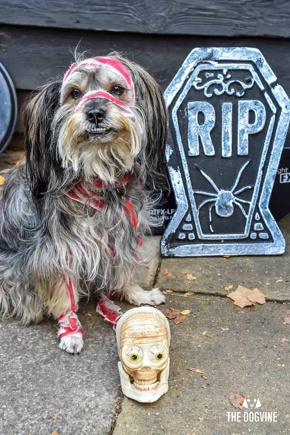 London Dog Events and Things to Do October 2019 - Gustavito at the Halloween Dog Walk and Show