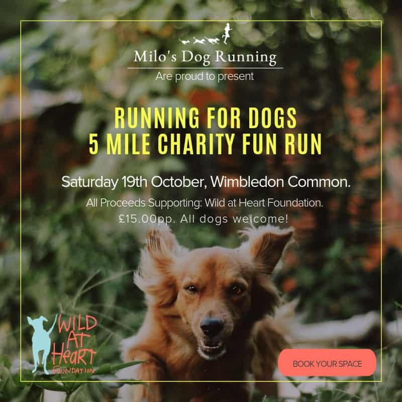 Running for Dogs 5 Mile Charity Fun Run Wild at Heart Foundation