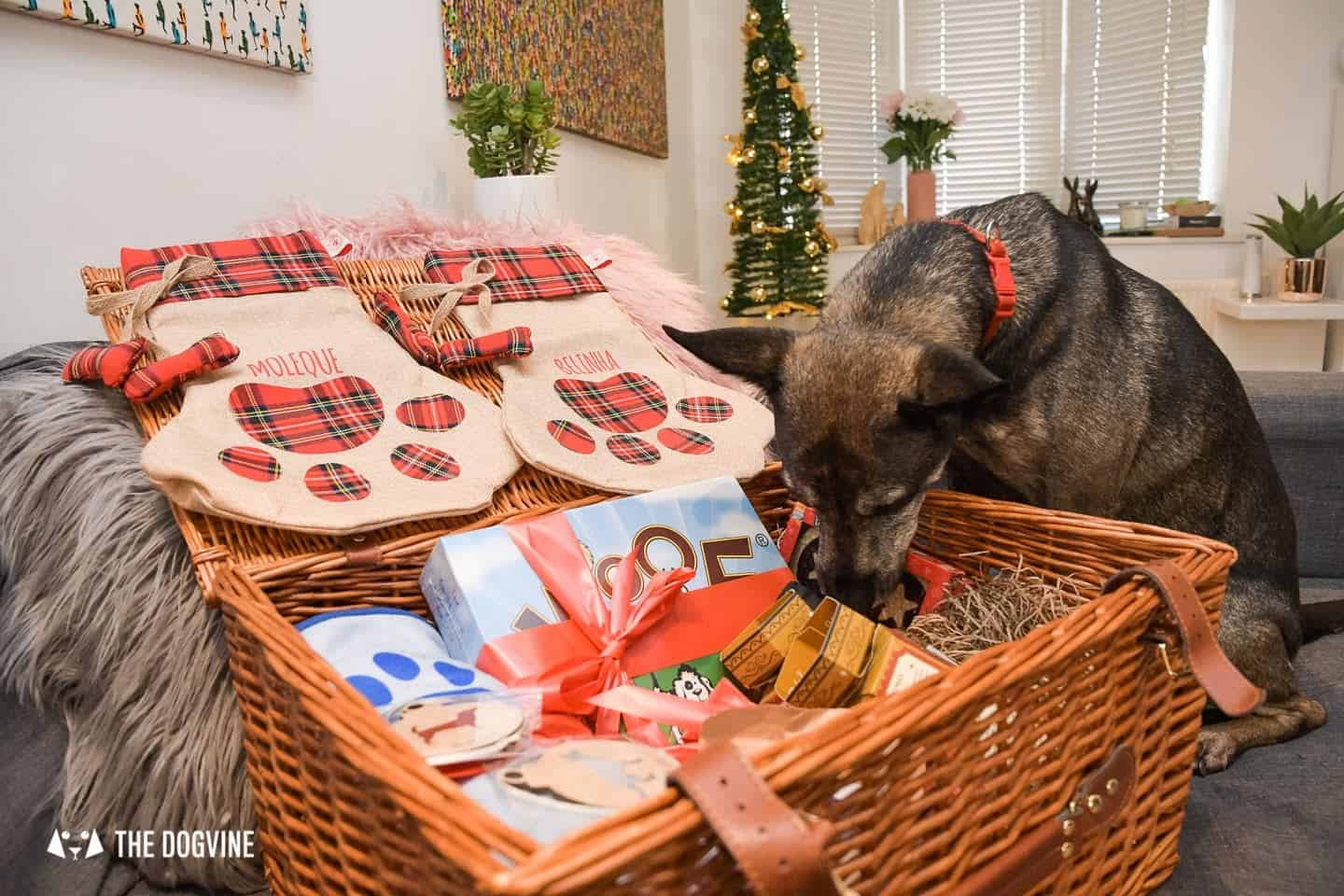 10 Ways For Your Dog's Christmas To Be Fabulous In London - Moleque