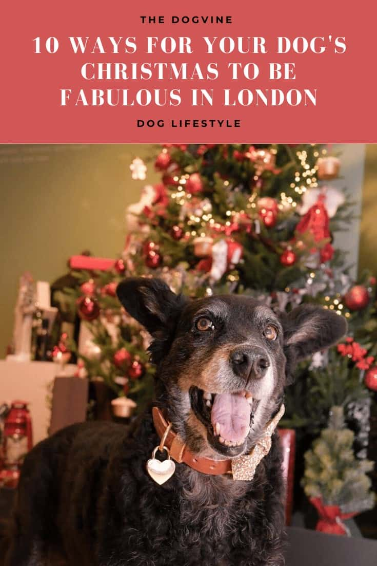 10 Ways For Your Dog's Christmas To Be Fabulous In London - PetPlan Guide