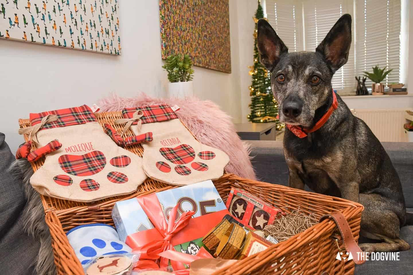 10 Ways For Your Dog's Christmas To Be Fabulous In London - PetPlan Hamper