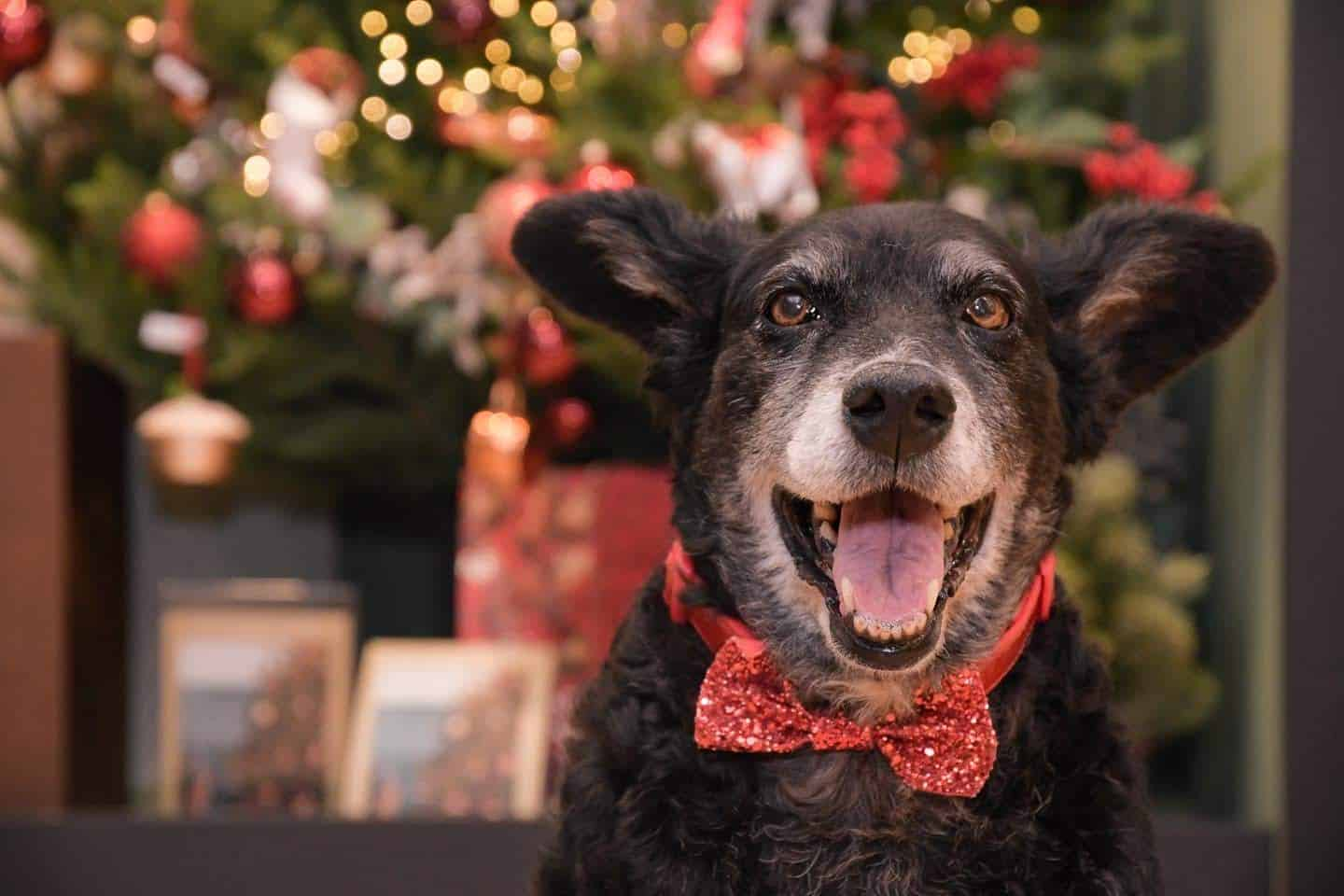 10 Ways For Your Dog's Christmas To Be Fabulous in London - Belinha