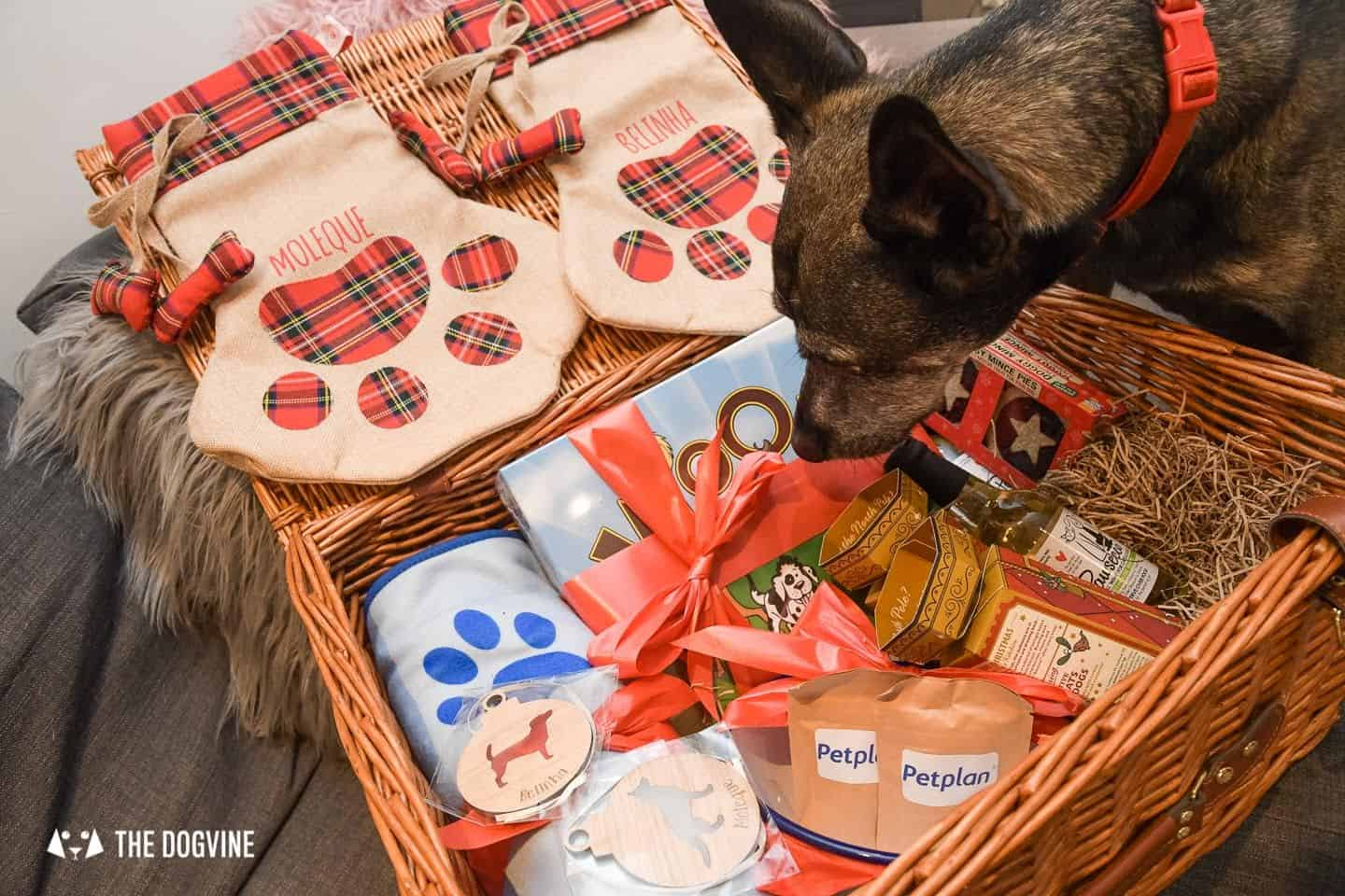10 Ways For Your Dog's Christmas To Be Fabulous in London - Checking Out The PetPlan Dog Hamper