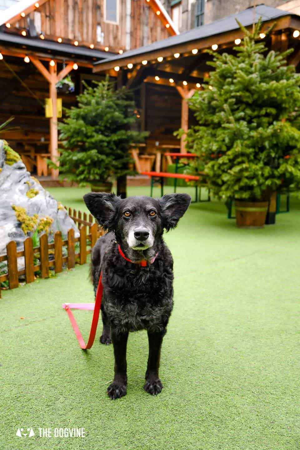 10 Ways For Your Dog's Christmas To Be Fabulous in London - Christmas Markets