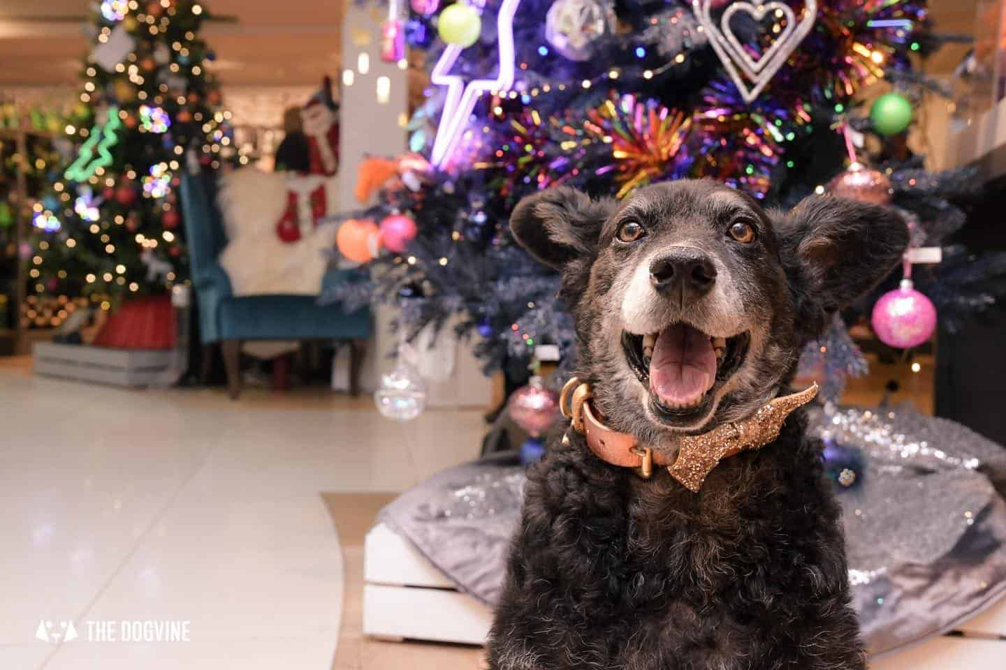 10 Ways For Your Dog's Christmas To Be Fabulous in London - Countdown to Christmas