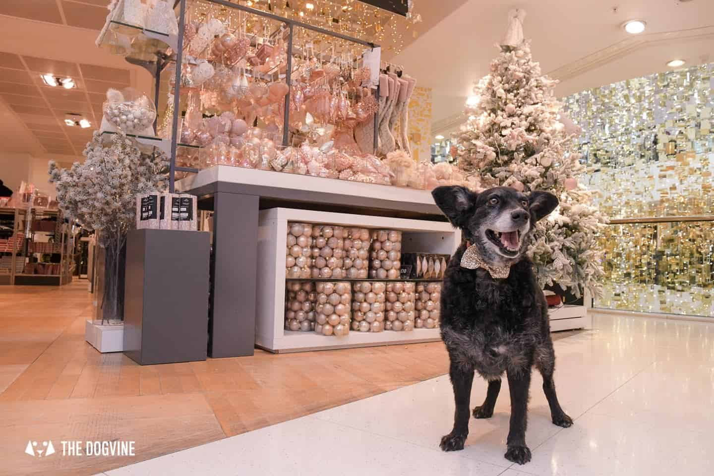 10 Ways For Your Dog's Christmas To Be Fabulous in London - Dog-friendly Department Store