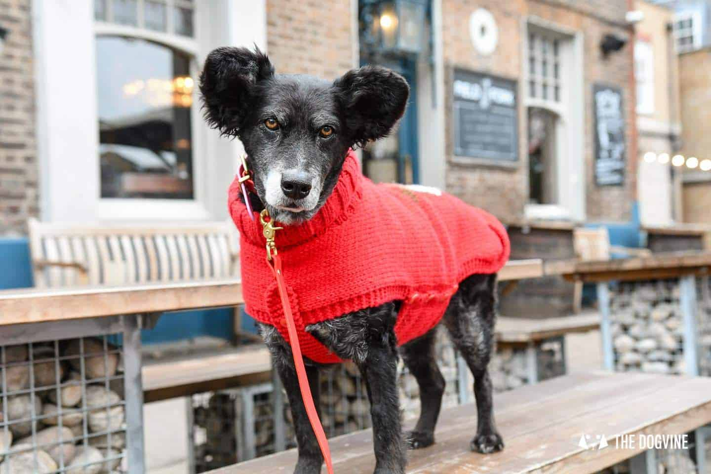 10 Ways For Your Dog's Christmas To Be Fabulous in London - Dog-friendly Pub