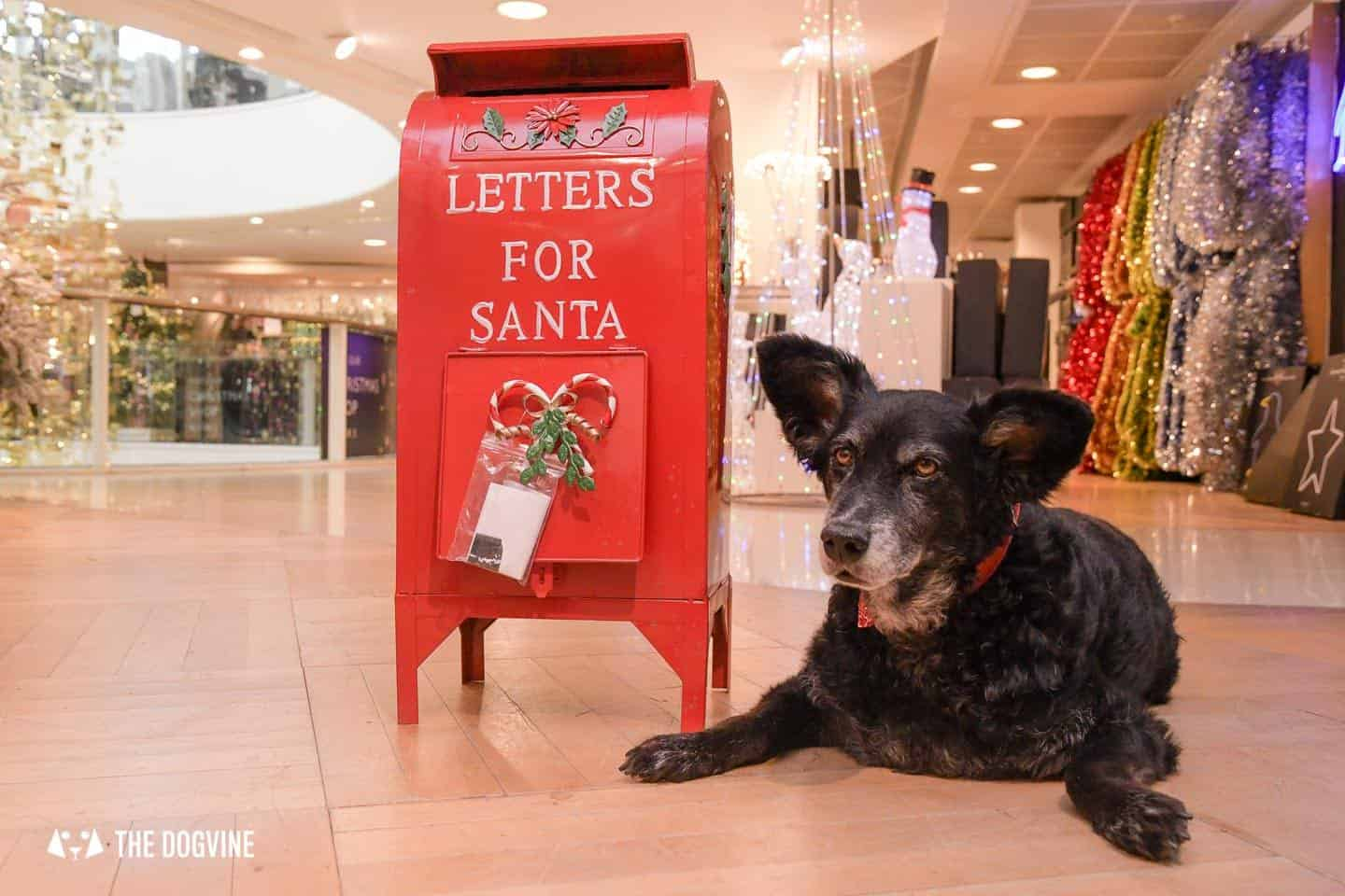 10 Ways For Your Dog's Christmas To Be Fabulous in London - Letters to Santa