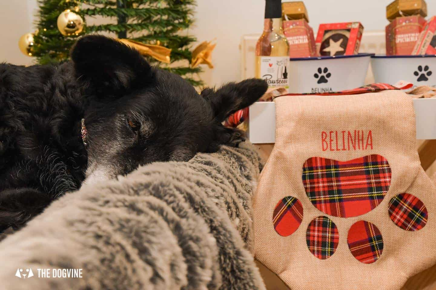 10 Ways For Your Dog's Christmas To Be Fabulous in London - Personalised Dog Christmas Stockings - Belinha