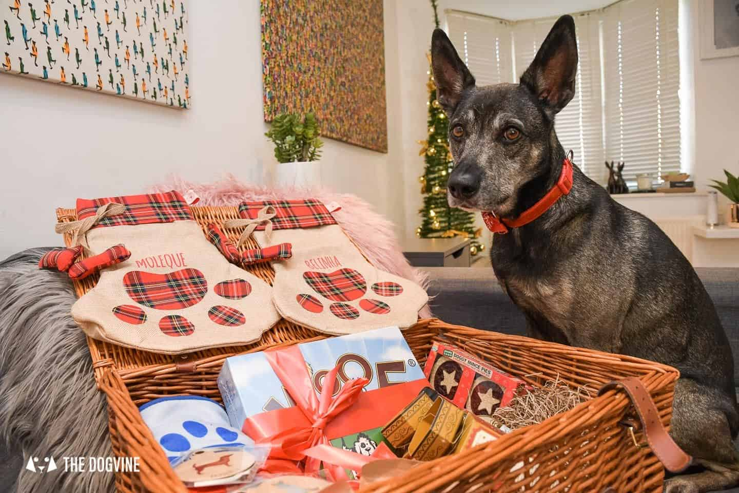 10 Ways For Your Dog's Christmas To Be Fabulous in London - Personalised Dog Christmas Stockings - Moleque